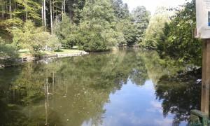 AWaldsee